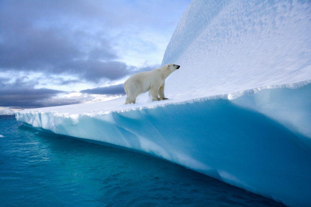 Polarklima og verdens største isbjørn